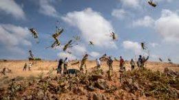 Locust Swarms Ethiopia